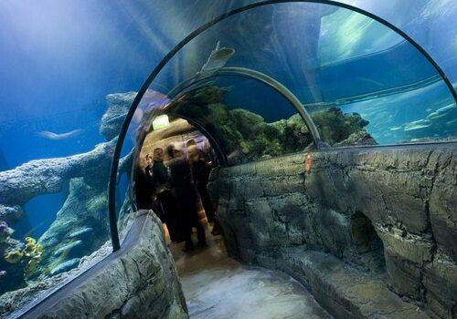 Sea Life, visita el acuario de Londres 7